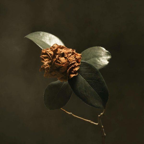 ST.PAUL & THE BROKEN BONES Young Sick Camellia CD