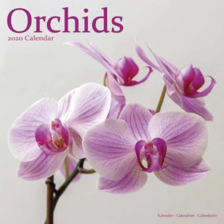 Orchidee SQUARE ORCHIDS
