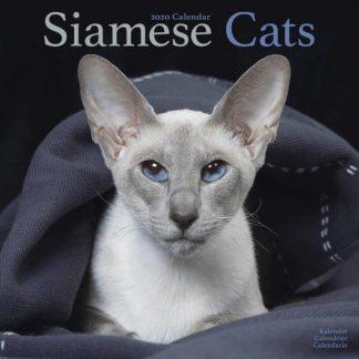 Siamese SQUARE SIAMESI