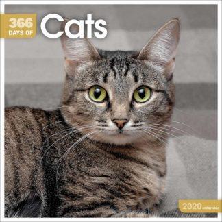 366 GG DI GATTI 366 Days Of Cats CALENDARI 2020 Carousel SQUARE NUOVO