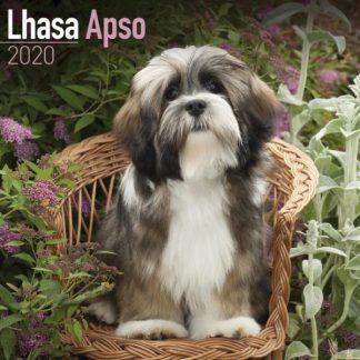 Lhasa Apso SQUARE Lhasa Apso