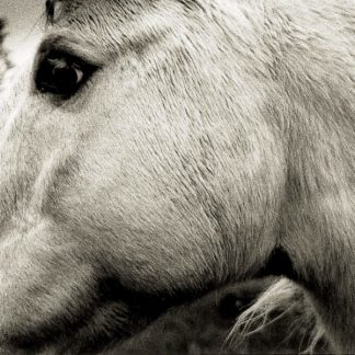 BONNY LIGHT HORSEMAN Bonny Light Horseman LP